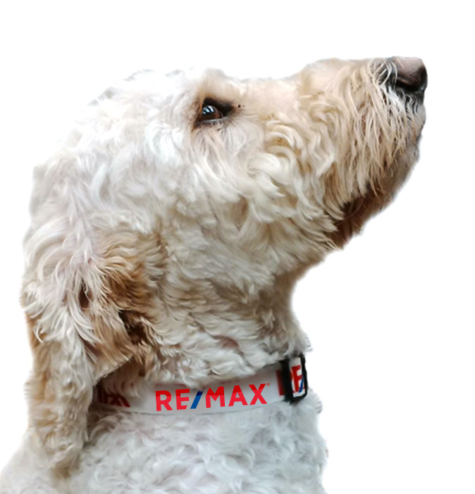RE/MAX Pet Collar