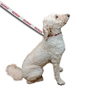 RE/MAX Pet Leash